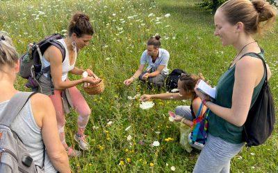 Gruppe und die wilde Möhre